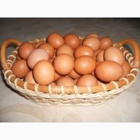 Мясо птицы и яйцо из фермерского хозяйства