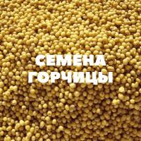 Продам семена озимой горчицы на посев