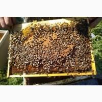 Пчелопакеты Карпатка 3+1