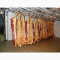 Куплю мясо в п/т свиноматок и хряков