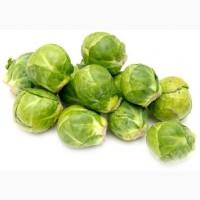 Продам брюсссельскую капусту оптом