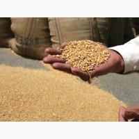 Пшеница 2 класса ГОСТ России