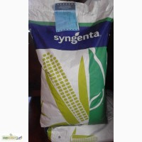 Семена кукурузы Сингента(Syngenta), Швейцария