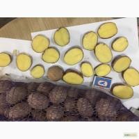 Семенной картофель. Калибр 3-4. Разных сортов. Оптом