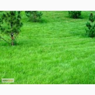 Продам семена многолетних газонных трав