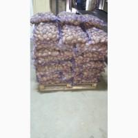 Картофель оптом на складе в Краснодаре