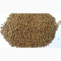 Семена люцерны (люцерна)