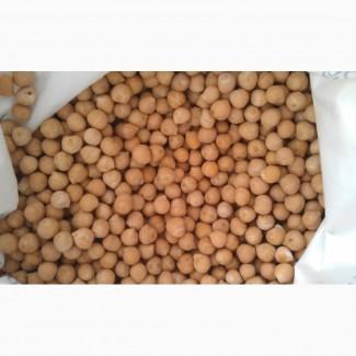 Семена нута Приво-1 (элита)
