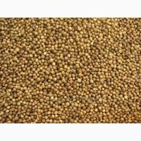 Куплю семена: кориандр от 20 тонн