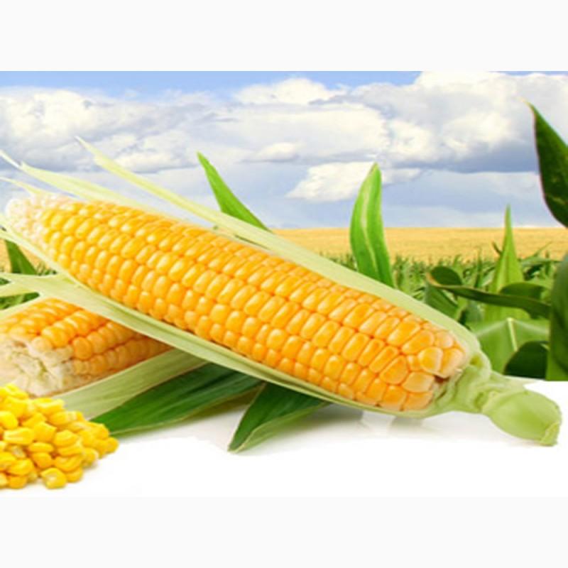 Ооо элеватор кукуруза гусеничный транспортер газ 34036
