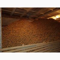 3.Производитель- картофель оптом