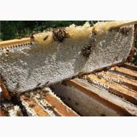 Пчелопакеты карпатка ОПТ и розница