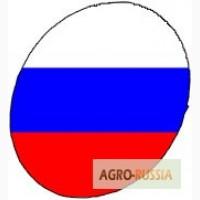 Инкубационное яйцо РОСС-308 и КОББ-500 производства Россия, Польша, Чехия, Белоруссия