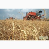 Продаем зерно
