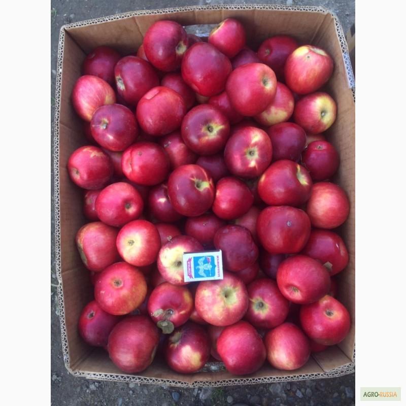 сорта яблок либерти фото и описание оформления входа дом