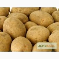 Картофель семенной из Беларуси в Орле