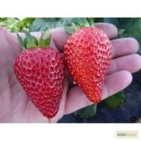 Продаём саженцы плодово-ягодных и не только