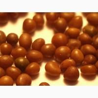 Семена лядвенеца (лядвенец)