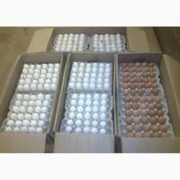 Яйцо оптом от производителя