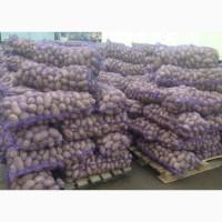 Картофель оптом. Мододой со склада хозяйства