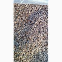 Лён масличный ГОСТ 10582-76 (урожай 2018 года)
