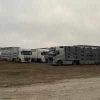 Перевозка животных (КРС и другие )