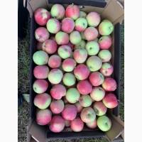 Яблоки от хозяйства в Беларуси