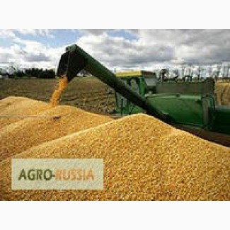 Кукуруза 3 класса CPT Узбекистан, ст. Ташкент-Товарный