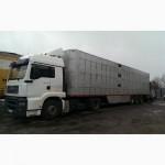 Перевозка скота, скотовозами