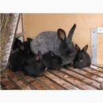 ЛПХЧистопородные кролики