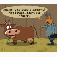 Ку Пим Коров Быков