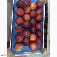 Лысый персик нектарин Октябрьский готов к оптовой поставке в любой регион России