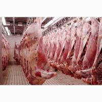 Говядина мясо, охлаждённое и замороженное, на Арабские страны