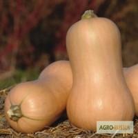 Семена тыквы Матильда F1 (Энза Заден)