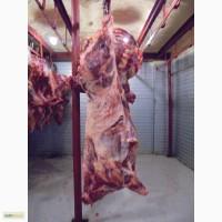 Мясо говядины на кости, полутуши