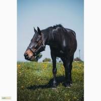 Подам лошадь