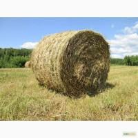 Дать объявление о продаже сена бесплатно отдых в частном секторе абхазии дать объявление без регистрации