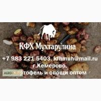 Картофель и другие овощи оптом из г.Кемерово от производителя