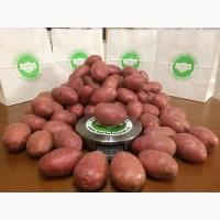 Продам продовольственный картофель. С НДС и без