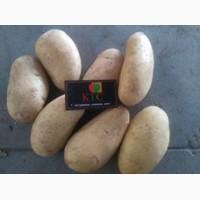 Египетский картофель