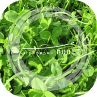 Газонные травы для укрепления откосов