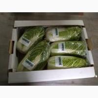 Продам пекинскую капусту (опт) Поставки из Грузии