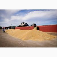 Продаем пшеницу (фураж)