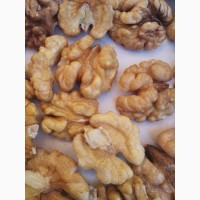 Предлагаем к поставке грецкий орех