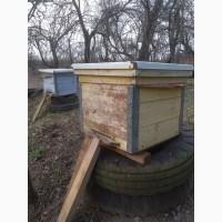 Пчелы семьями