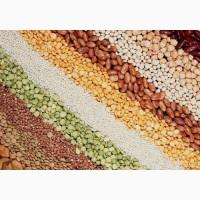 Семена к посеву. Кукуруза, подсолнух, соя и другие