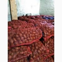 Картофель Оптом от производителя с доставкой в Челябинск