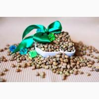 Семена кормовых бобов