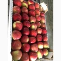 Яблоки оптом разных сортов