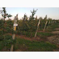 Cадоводческое хозяйство в Беларуси